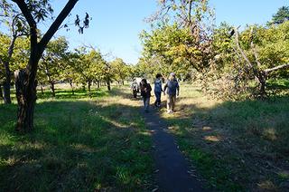 5・鈴木農園の小径.JPG